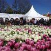 Tulpenfestival tijdens de meivakantie in Flevoland