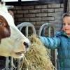 Lenteboerderij bij De Boerinn